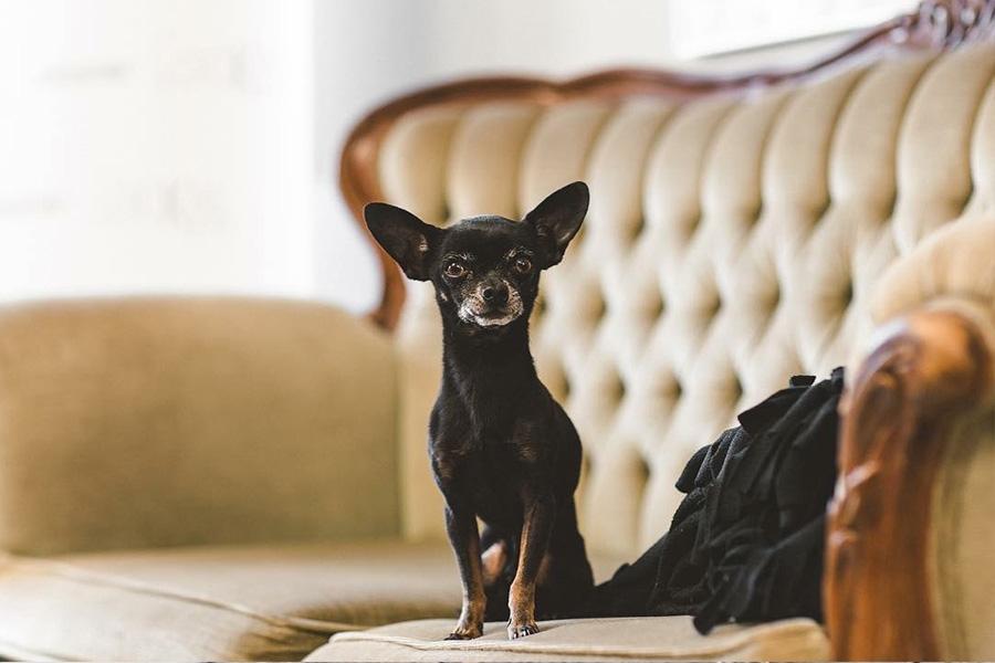 petit chien dans la salle attente (salon de coiffure à repentigny) - Salon de coiffure Le Lockal